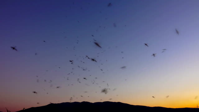 amazing swarm of mosquitoes on the sunset sky. Real footage Sony shoot video