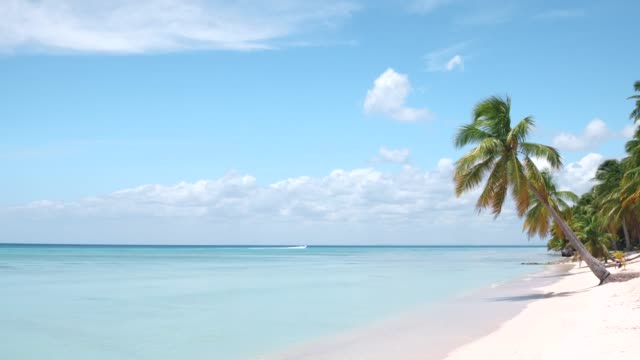 Amazing tranquil tropical white sandy beach with palm trees hanging over the turquoise water of the Caribbean Sea