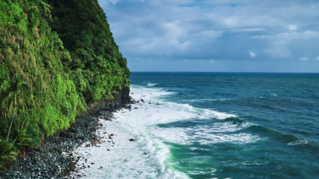 Amazing Tropical Rainforest Coastline video