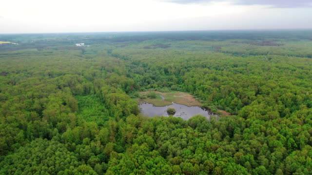 Bидео Amazing view of a small lake in forest.