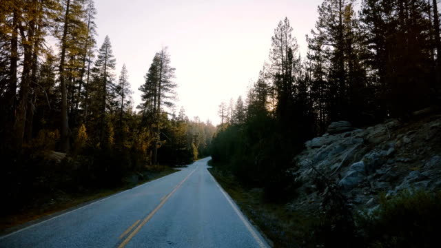 amazing pov view of car moving on beautiful sunset forest road, sun shining between pine trees in yosemite slow motion. - сбежавший из дома стоковые видео и кадры b-roll