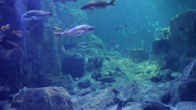 Amazing view of huge fish aquarium Amazing view of huge fish aquarium aquatic organism stock videos & royalty-free footage
