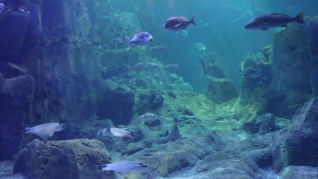 i̇nanılmaz büyük balık akvaryum görünümünü - akvaryum stok videoları ve detay görüntü çekimi