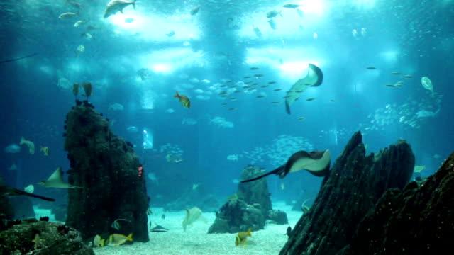 amazing view underwater aquarium with many fishes - akvarium byggnad för djur i fångenskap bildbanksvideor och videomaterial från bakom kulisserna