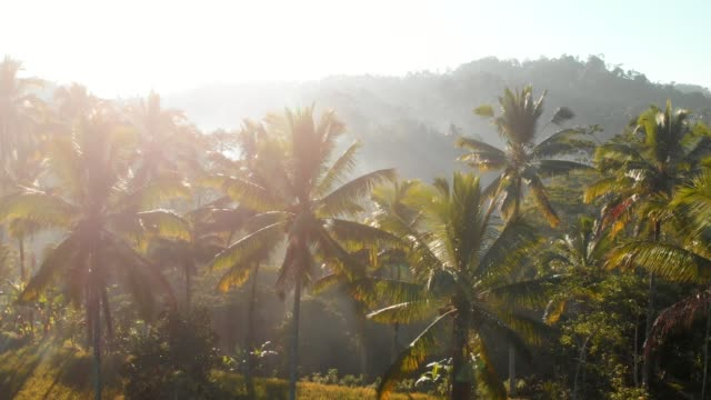amazing view with coconut palms and tropical forest. aerial video - terrazza video stock e b–roll