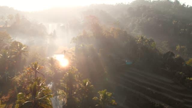 fantastisk utsikt med kokospalmer och tropisk skog. utsikt från luften - ris spannmålsväxt bildbanksvideor och videomaterial från bakom kulisserna