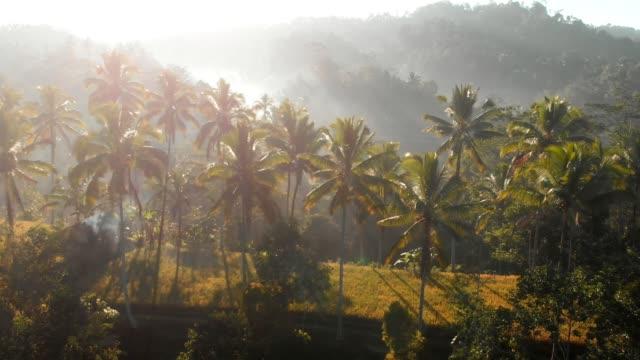 amazing view with coconut palms and tropical forest in bali. aerial view - spektakularny krajobraz filmów i materiałów b-roll