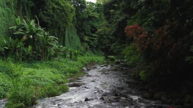 vidéos et rushes de nature sauvage étonnante à l'île maurice, les arbres tropicaux et forêt - forêt tropicale humide