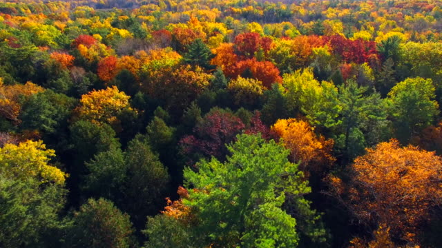 Amazingly Colorful Autumn Trees in Early Morning Light video