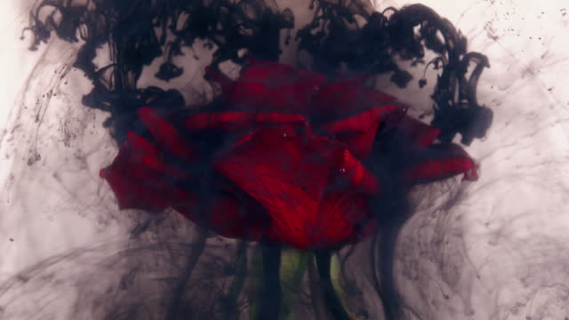 Amazingly wonderful atmospheric shot of a beautiful rose mixing with ink in water video