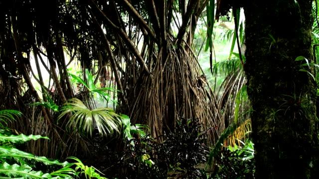 Amazon Rainforest video