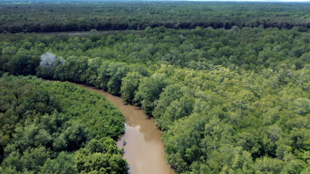 Amazon River Aerial Amazon River Aerial amazon stock videos & royalty-free footage