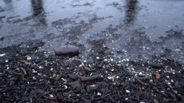 ostsee, danzig, polen - september 2019: bernsteinfänger bei einem sturm auf der ostsee. die menschen suchen bernstein, der bei einem sturm wellen schlägt. - ostsee stock-videos und b-roll-filmmaterial
