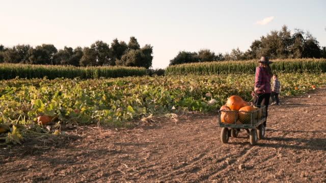 American farm girl wearing a cowboy hat picking up pumpkins at a pumpkin patch