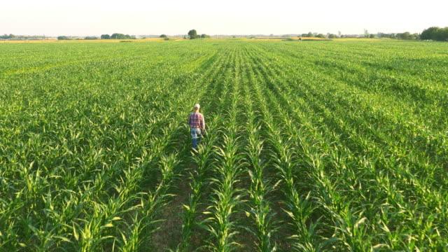AERIAL American farmer walking in corn field