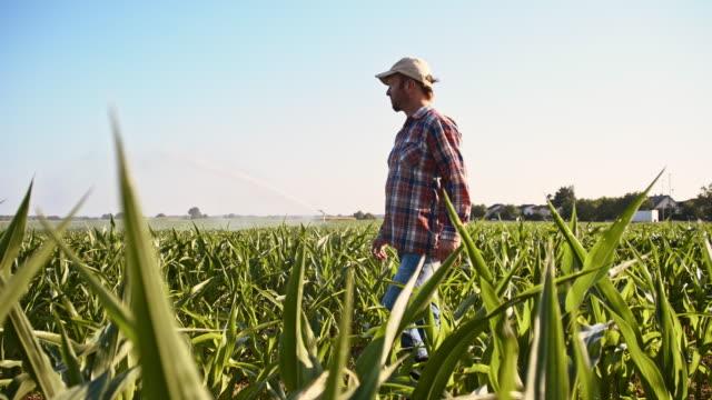 SLO MO American farmer walking in the field video