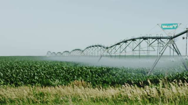 American natural organic farming watering for high end produce. video