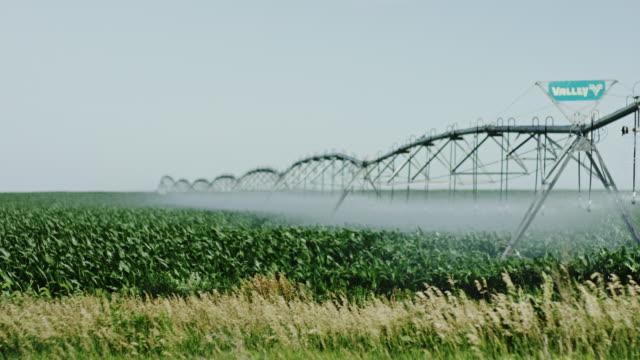 american über biologische landwirtschaft gießen für highend-produkte. - wassersparen stock-videos und b-roll-filmmaterial