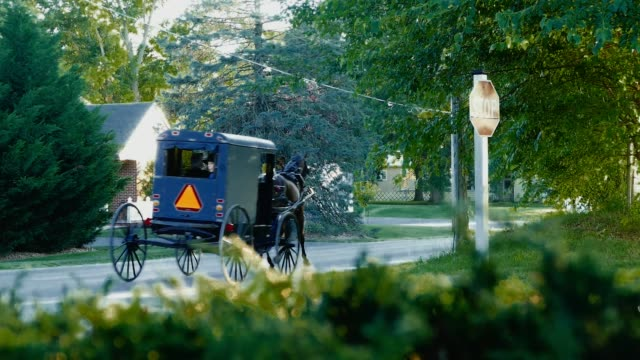 amish horse and buggy in late afternoon - country fashion stock videos & royalty-free footage
