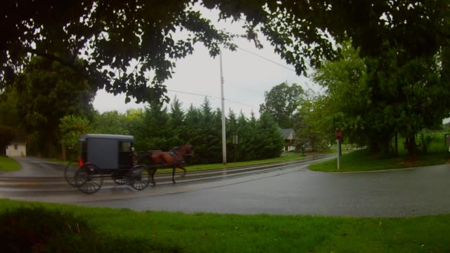 amish transportation type horse and buggy in the rain - cocchio video stock e b–roll