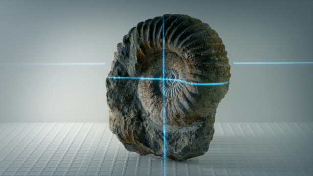 vídeos y material grabado en eventos de stock de fósil de amonita antigua shell se analizan - dinosaurio