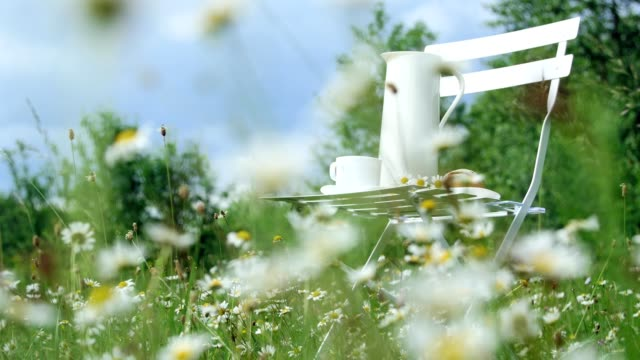 vídeos y material grabado en eventos de stock de entre la manzanilla césped, contra el cielo azul es una silla blanca. en él una composición de una jarra blanca, un blanco de la taza con té, un lote y un ramo de chamomiles - manzanilla