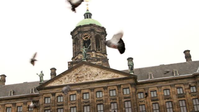 암스텔담 왕궁, 새 - home 스톡 비디오 및 b-롤 화면