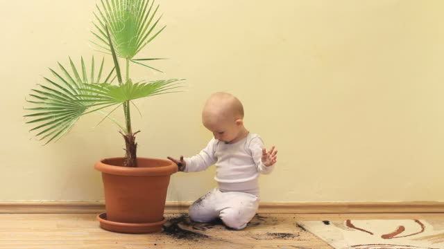 Amusing little baby taking out the soil from flower pot and throwing to floor Amusing little baby taking out the soil from flower pot and throwing to floor flower pot stock videos & royalty-free footage