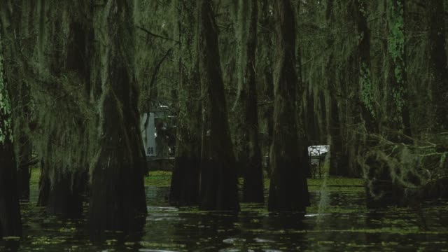 an airboat tour navigates through a forest of cypress trees covered in spanish moss in the atchafalaya river basin swamp in southern louisiana under an overcast sky - болото стоковые видео и кадры b-roll