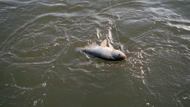 en fiskare fiskar en stark fisk i slow motion - meta bildbanksvideor och videomaterial från bakom kulisserna