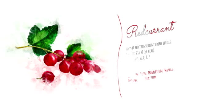 an animated card about redcurrant - ribes rosso video stock e b–roll