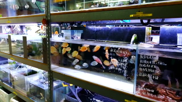 an aquarium shop in the street market - океанариум стоковые видео и кадры b-roll