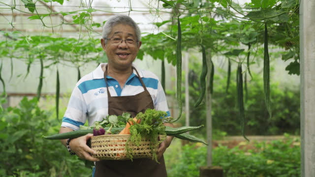 an asian chinese active senior man farmer in greenhouse looking at camera happily an asian chinese active senior man farmer in greenhouse looking at camera happily small business saturday stock videos & royalty-free footage