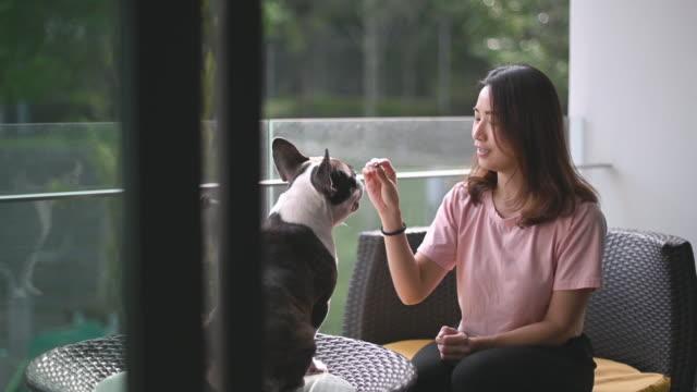 vídeos y material grabado en eventos de stock de una mujer hermosa asiática dueño de mascota dando entrenamiento a su bulldog francés en el balcón con la delicia - training