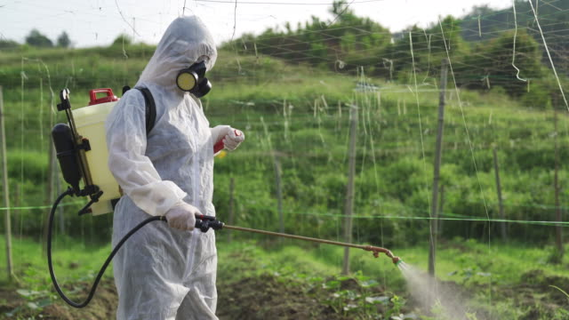 an asian chinese female farmer with protective suit spraying on bitter groud plants in the farm for disinfection - bio food video stock e b–roll