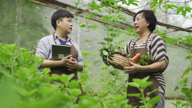 an asian chinese female mid adult woman examining on her farm fruit in greenhouse using digital tablet with her mother - orticoltura video stock e b–roll