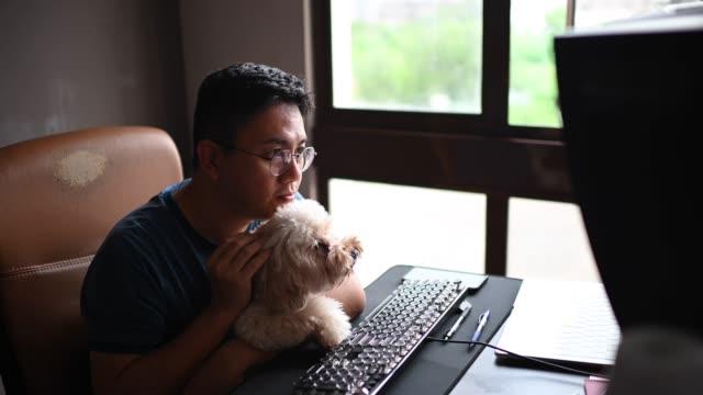 アジアの中国人中期成人男性が、おもちゃのプードル犬のペットを運びながら、自宅のコンピュータモニター画面からカメラの議論を見てオンラインでチャットしている彼の友人、家族、ビ� - 愛玩犬点の映像素材/bロール