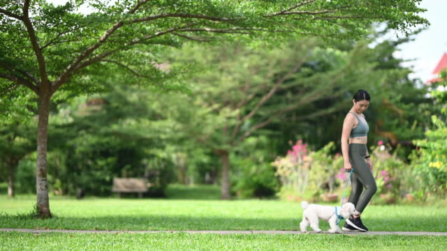vídeos y material grabado en eventos de stock de una adolescente china asiática que tiene tiempo de unión con su perro caniche de juguete en la mañana del parque público mientras trota el entrenamiento de obediencia - training