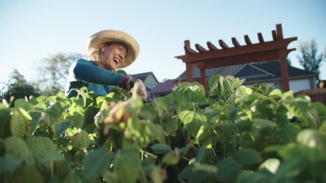 vidéos et rushes de une jolie femme de race blanche dans sa cinquantaine rit car elle tend à son jardin à côté de sa maison, sur une belle journée ensoleillée - jardiner