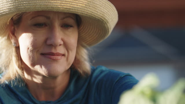 An Attractive Caucasian Woman in Her Fifties Places Vegetables in a Basket as She Tends to Her Garden Beside Her House on a Bright, Sunny Day An Attractive Caucasian Woman in Her Fifties Places Vegetables in a Basket as She Tends to Her Garden Beside Her House on a Bright, Sunny Day horticulture stock videos & royalty-free footage