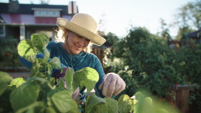 An Attractive Caucasian Woman in Her Fifties Tends to Her Garden Beside Her House on a Bright, Sunny Day An Attractive Caucasian Woman in Her Fifties Prunes Her Garden Beside Her House on a Bright, Sunny Day horticulture stock videos & royalty-free footage