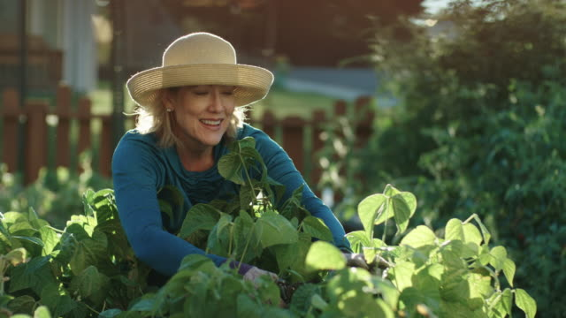 an attractive caucasian woman in her fifties tends to her garden beside her house on a bright, sunny day - cappello video stock e b–roll