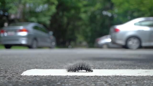 император моли caterpillar червь на дороге. - white background стоковые видео и кадры b-roll