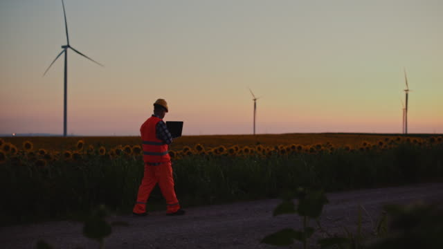 An engineer works on a laptop and adjusts the wind turbines as he walks through a field of windmills, at sunset.