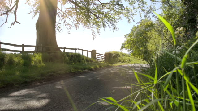 An English Country Lane With Old Oak Tree video