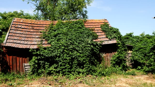 vídeos de stock e filmes b-roll de an old abandoned weathered shack covered hut covered with green ivy - descuidado