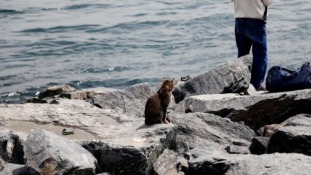 an old fishermen fishing in Istanbul with cat waiting for a quick and free lunch video