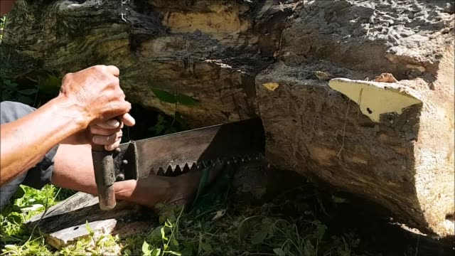 an older asian couple working together using a double handed hand saw to cut slices and blocks from a fallen hard wood tree in mae hong son, northern thailand, southeast asia - due oggetti video stock e b–roll
