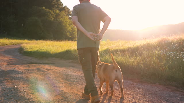 An senior man with his dog walks in nature during sunset. He explores with his dog video