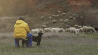 istock An shepherd is sitting with the dog on the hill and keep the sheep stock video 1214116915